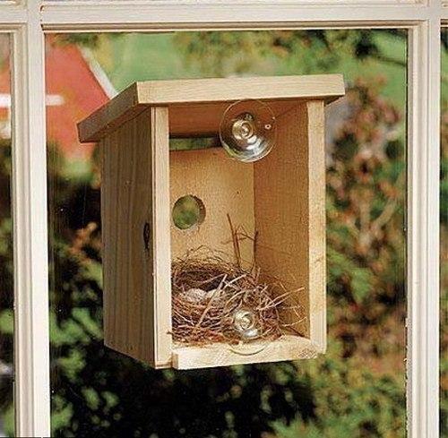 Необычные птичьи домики