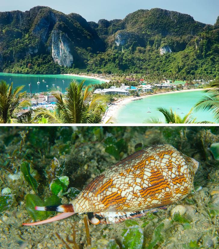 12 неожиданных неприятностей, которые могут подстерегать туристов в популярных для отдыха странах