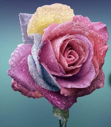 «Цветок счастья» — загадываешь желание и оно сбудется через 2-3 дня