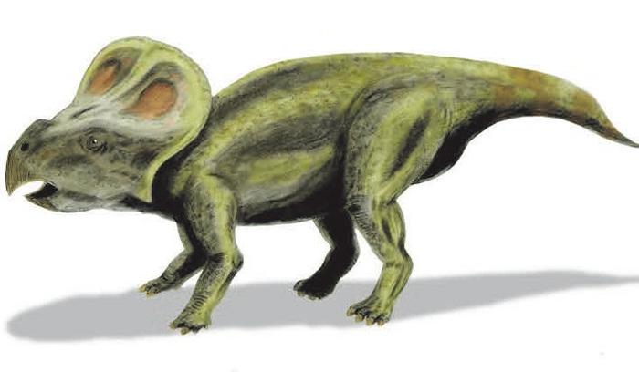 Прочь из яйца, теряя зубы палеонтология, наука, Пицы, динозавры, зубы, Копипаста, elementyru, длиннопост