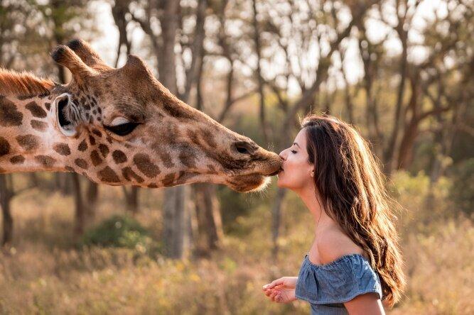 Поцелуй с жирафом (www.africanbudgetsafaris.com)