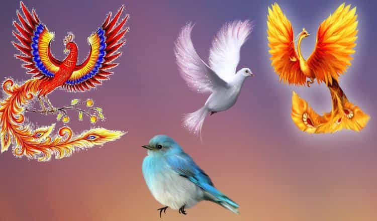 Выберите птичку и определите…