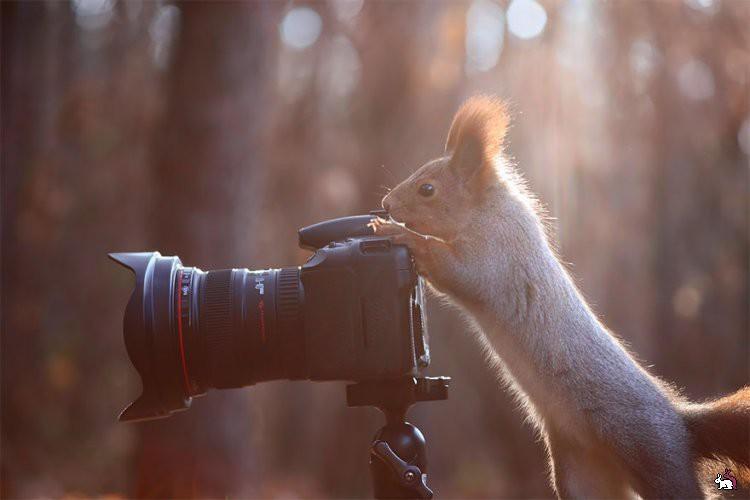 Животные - фотографы животные, фотографы