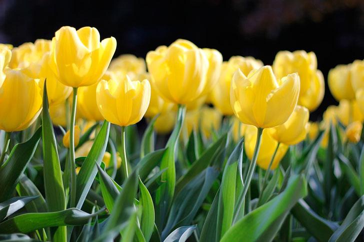 Бывшая подружка Андрея вручила ему возле ЗАГСа букет желтых тюльпанов