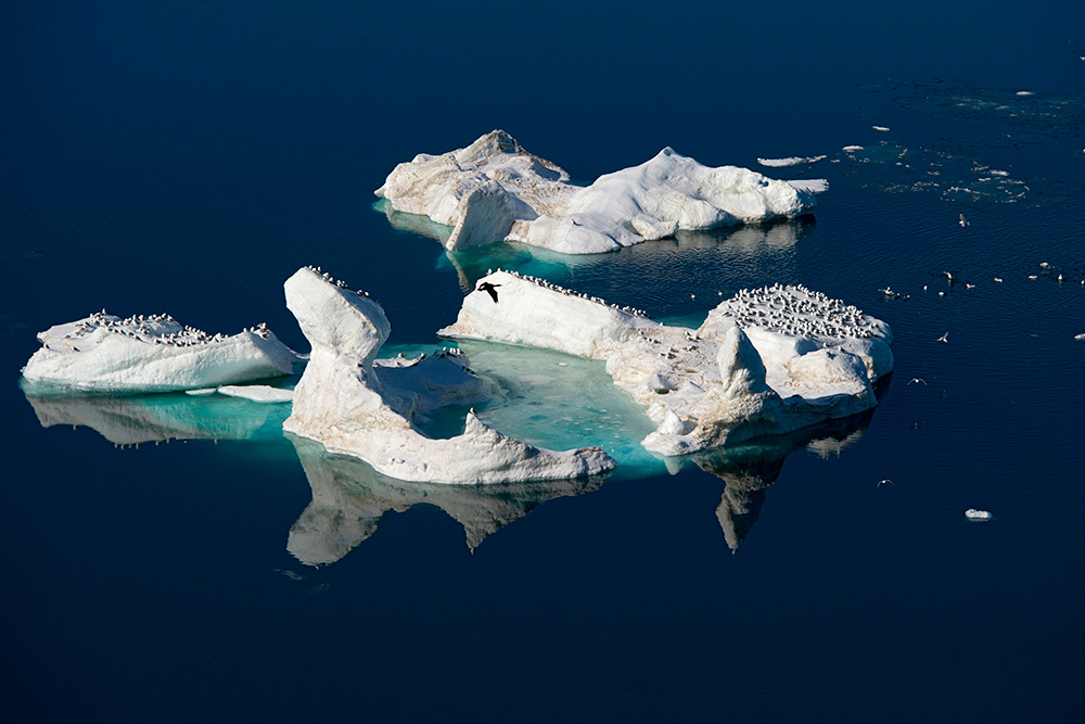 Wrangel-island_0185