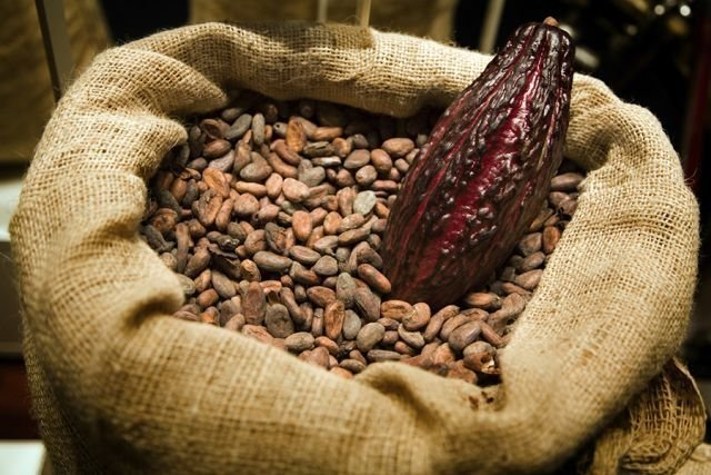 Это плоды какао, однако мы с вами привыкли их видеть в таком виде или же измельченными. загадка, интересное, что это