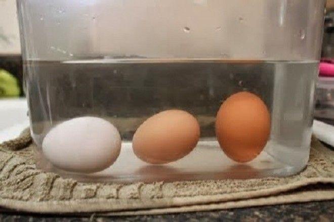 Проверяем свежесть яиц домашние хитрости, еда, кухня, хозяйка