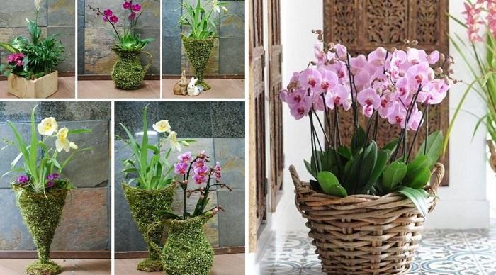 посев семян орхидеи
