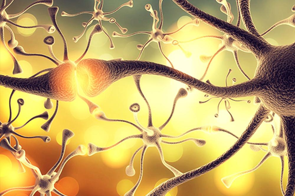 Сборы при заболеваниях нервной системы