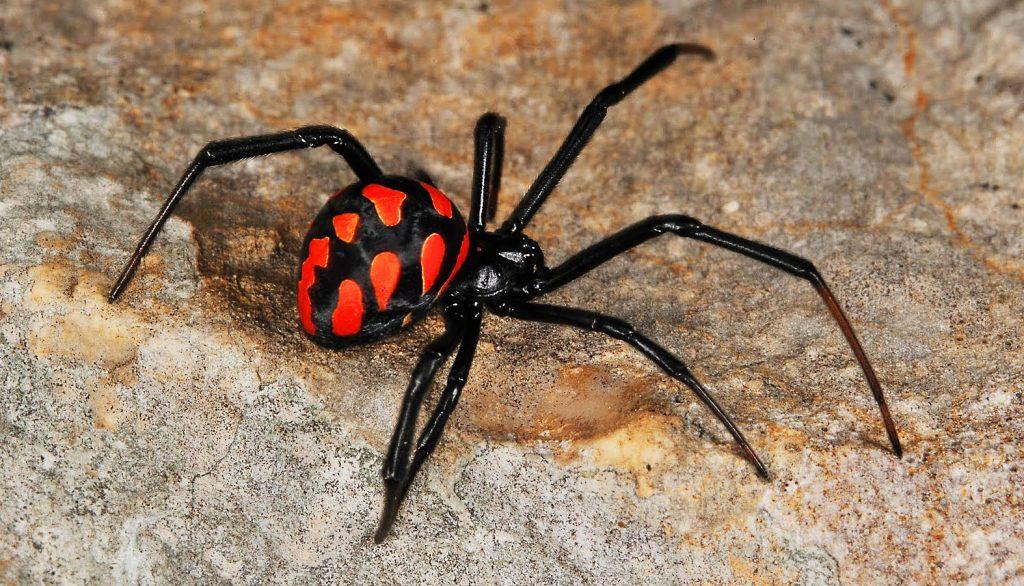 Как вывести пауков из дома п…