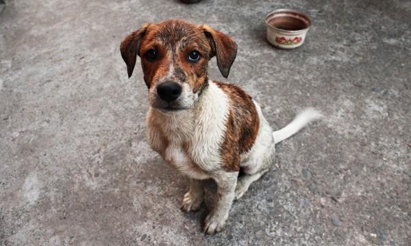 Крым одолели агрессивные собаки ?