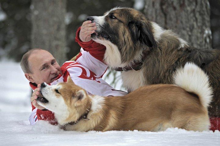 Паша, Юмэ и другие собаки Путина. Российскому президенту подарили еще одного щенка