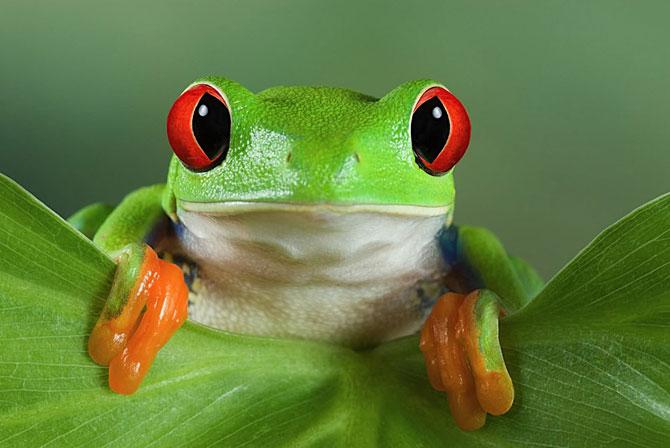 Абсолютно мультяшная лягушка