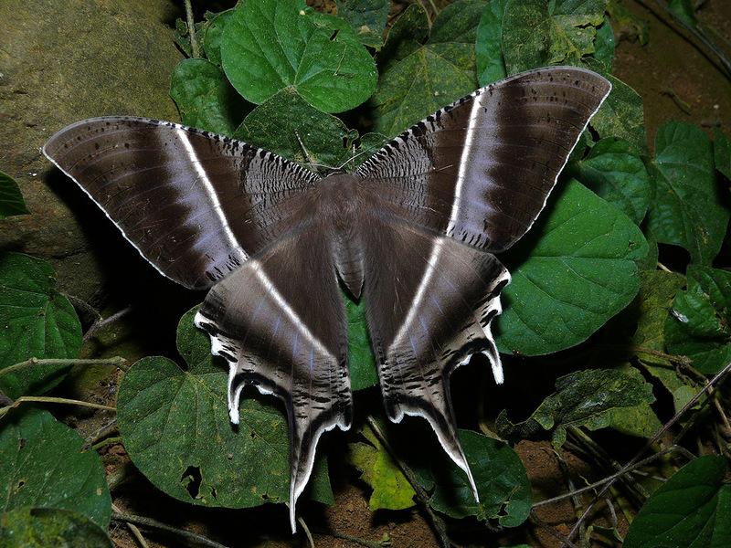 Фото самые необычные бабочки