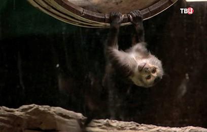 В Московском зоопарке родился детеныш редкой макаки