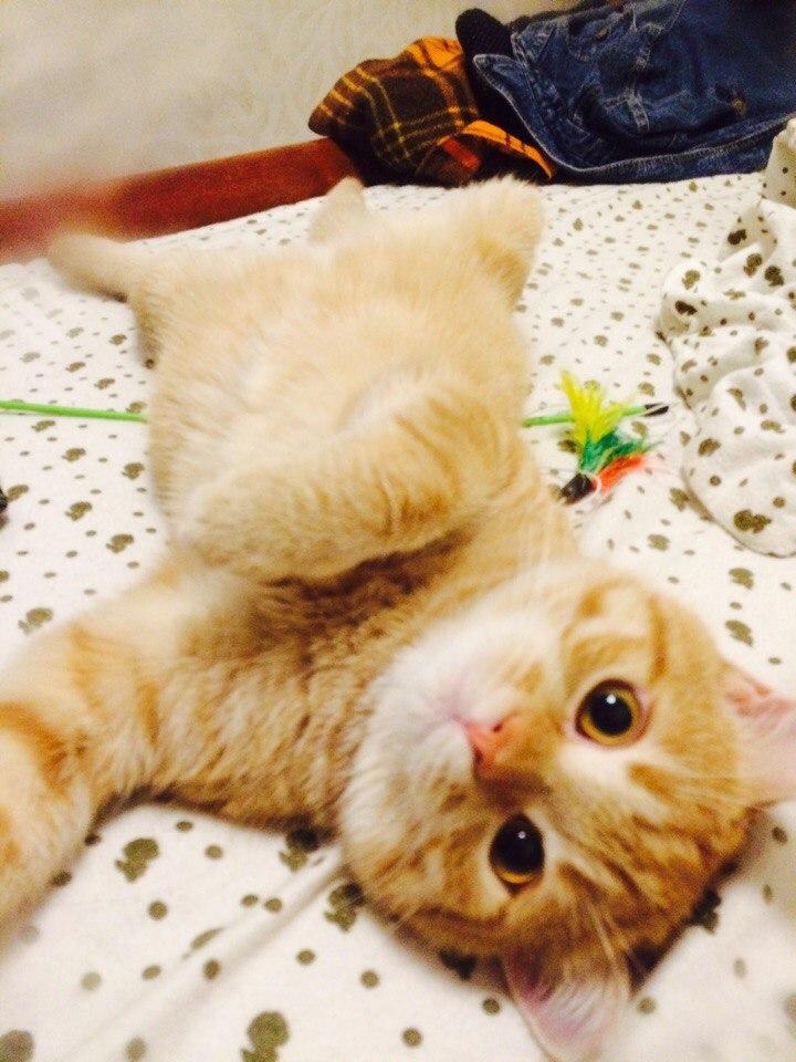 По тому, как супруг прижал котёнка к себе, я поняла, мы без него не уйдем!