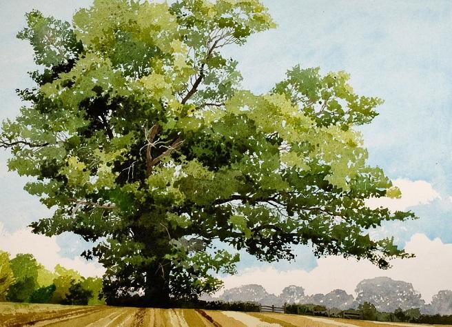 Summer Oak Petworth (656x474, 453Kb)