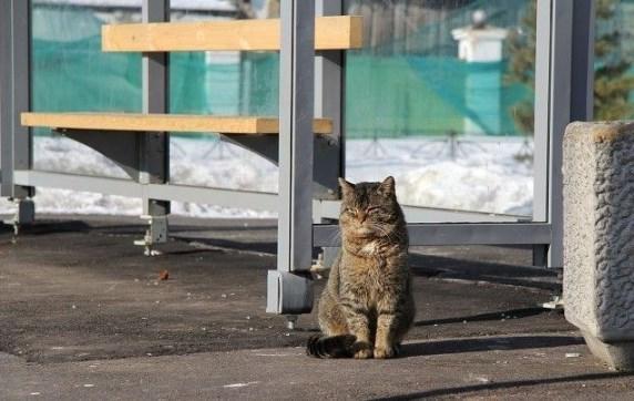 Он сидел возле остановки автобуса, поёживаясь от холодного, пронизывающего ветра.