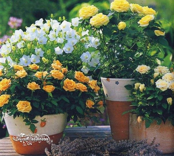 10 причин, почему гибнут цветы в доме