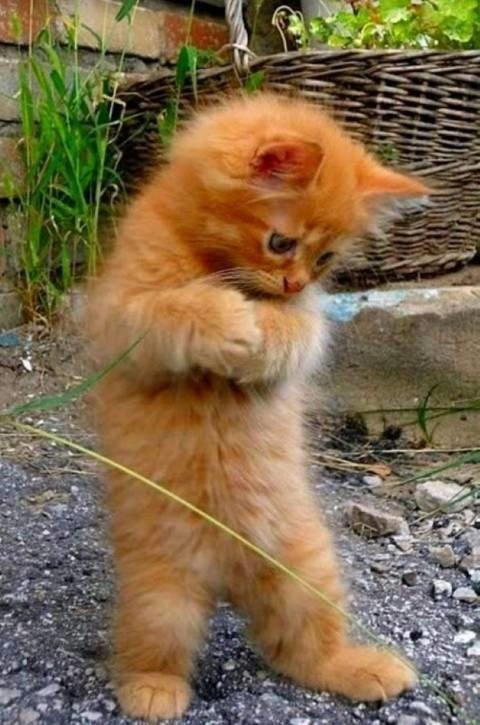 20 невероятно забавных кошек, которые поднимут даже самое мрачное настроение!