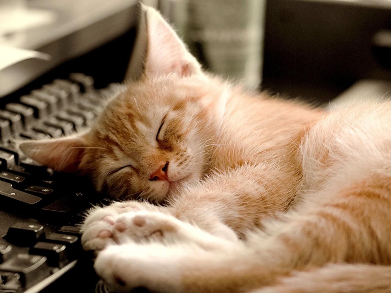 Как же сладко по утрам спится...