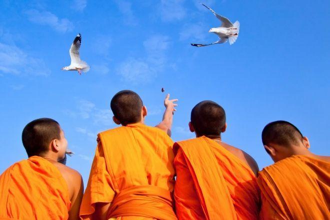 monks feeding seagulls