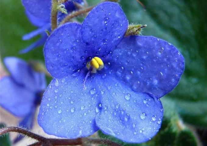 Спасем цветы от осенней хандры!