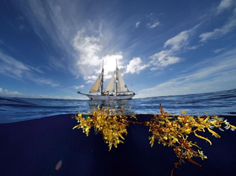 Саргассово море - ловушка для заблудших душ