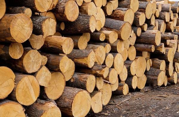 В Приамурье в 2018 году должна начаться биржевая торговля лесом