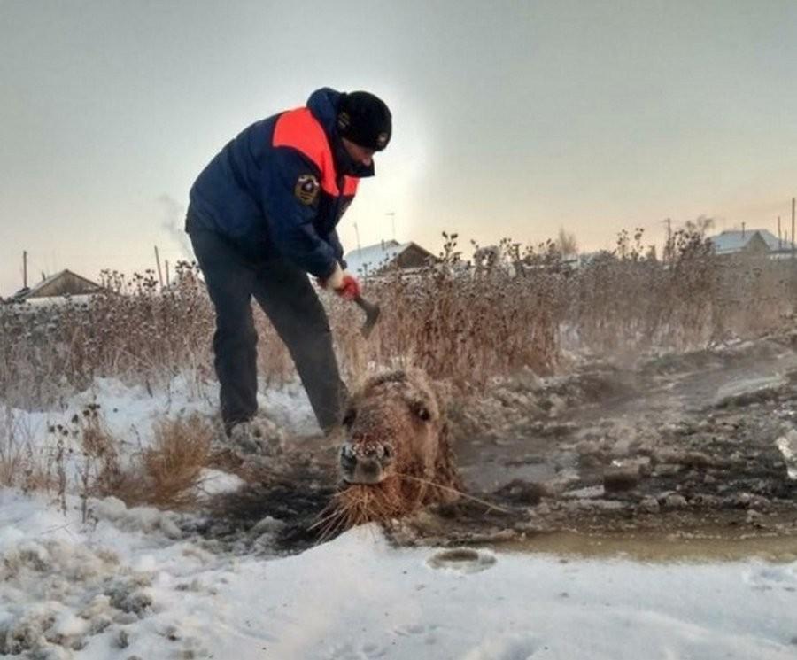 Ледяная ловушка для копытных