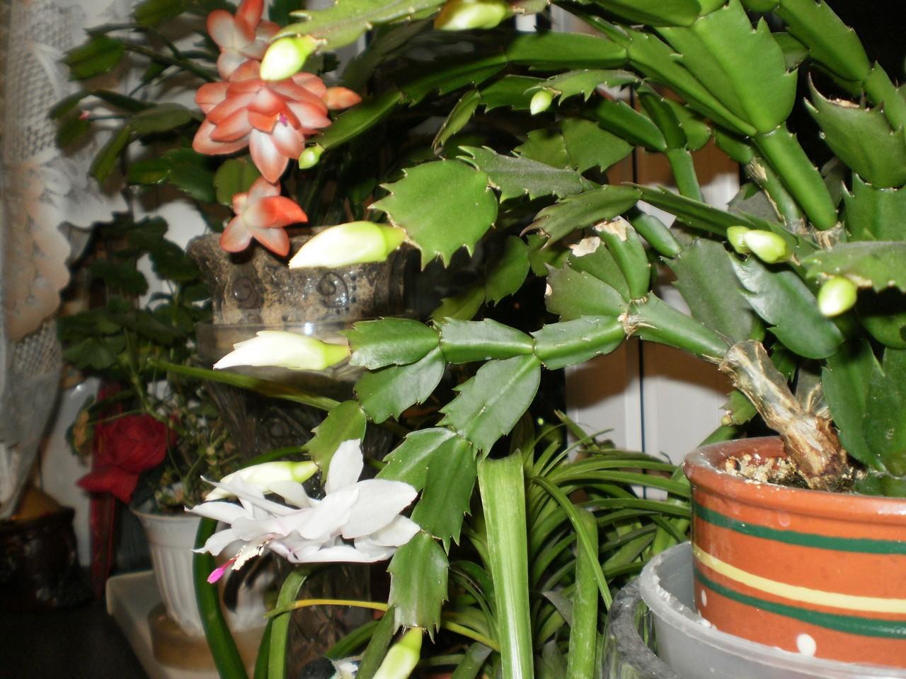 Веселая семейка комнатные цветы фото