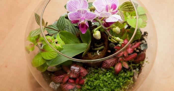 Как сделать композицию из орхидей