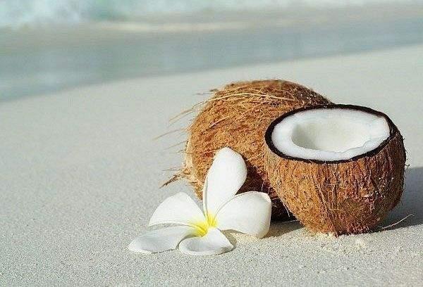 5 причин, по которым кокосы …