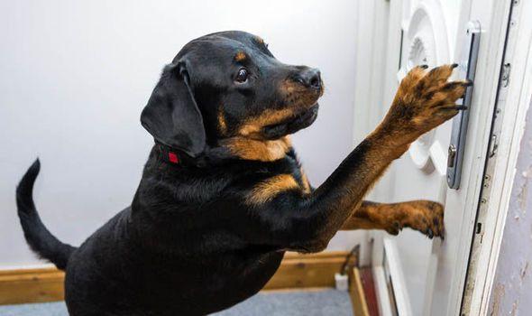 Собака открыла дверь врачам …