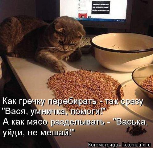 Лучшая котоматрица этой неде…