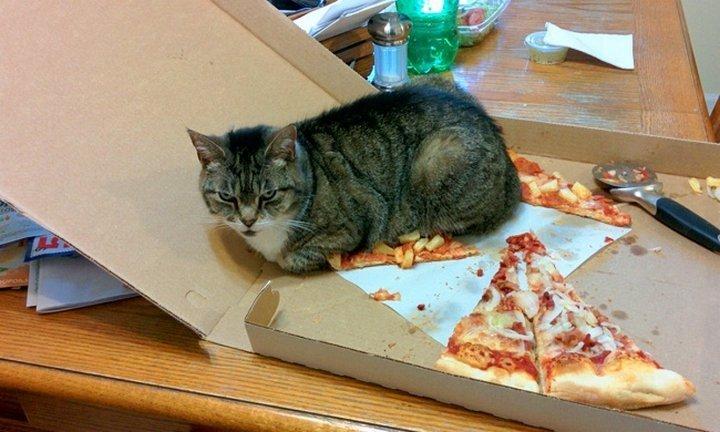 Жизнь без кота очень скучна