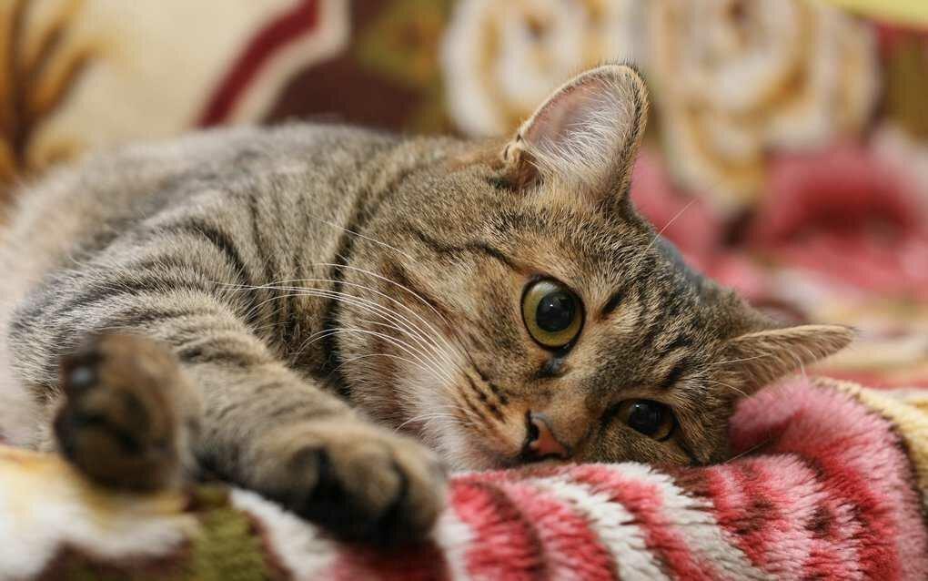Вредные привычки кошек, которые мы воспитываем сами