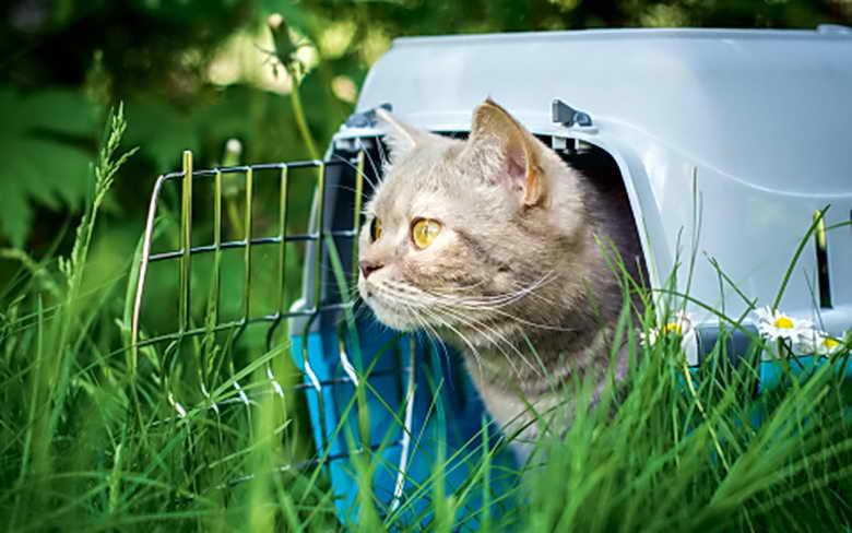 Мерзнут ли кошки, что подстерегает животное на даче в холод