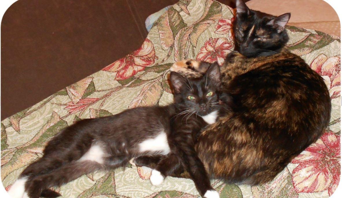 «Вода забулькала, поднялась — и из глубин туалета вылез котёнок! Я, беременная, разревелась…»
