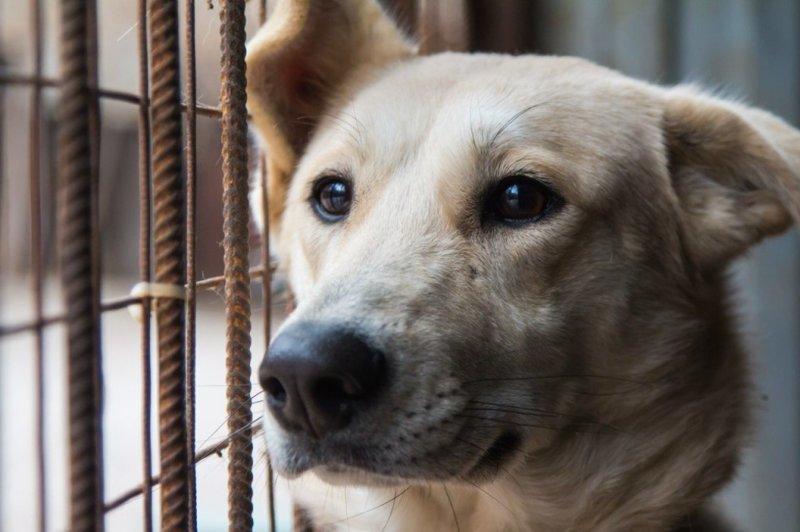 Почему я никогда не возьму собаку из приюта