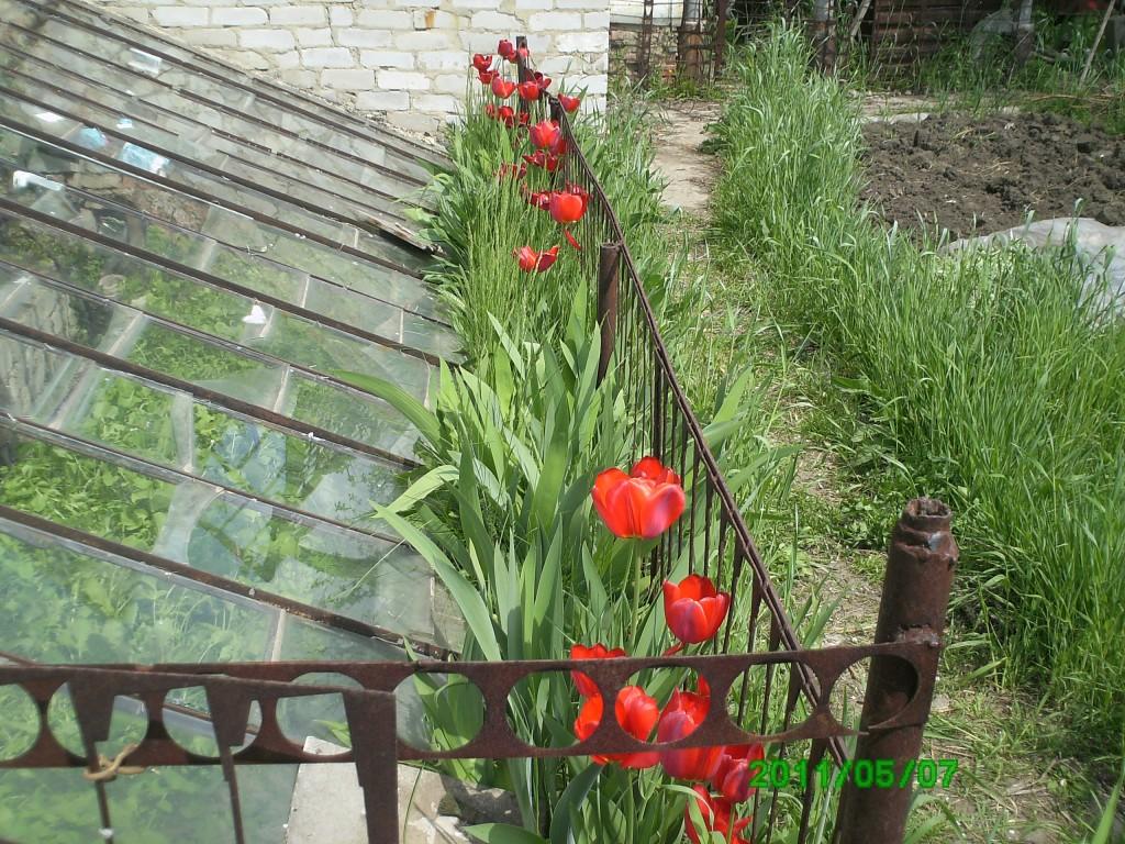 Когда сажать огурцы на рассаду? Выращивание огурцов 77