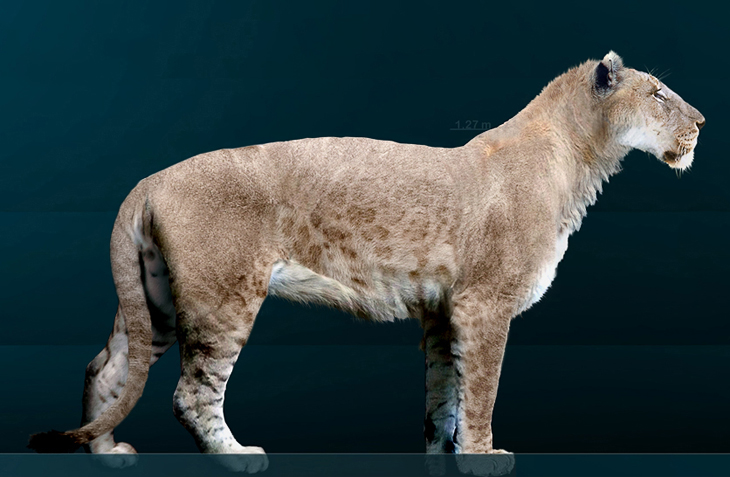 Американский лев