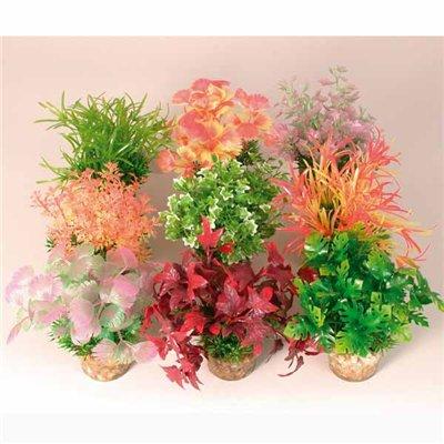 Растения в горшках и цветы. Фен-шуйРастения в горшках и цветы.