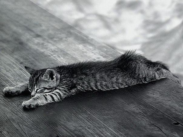 Расслабиться как кошка? 6 способов мурлыкающий терапии.