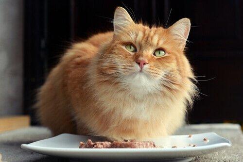 Можно ли кошку кормить собач…