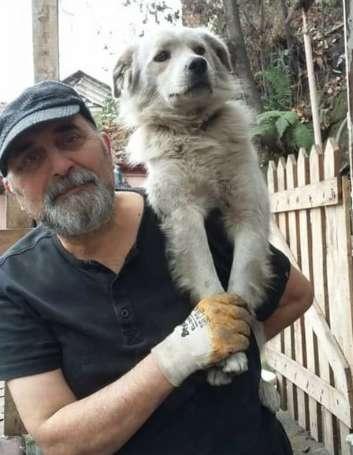 Любимец семьи потерялся, а потом сын хозяев увидел похожего пса в другом городе, но сомневался, что это он