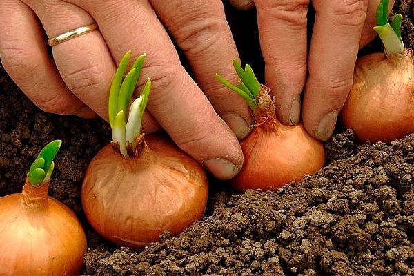 Собрание дачных хитростей для садоводов и огородников