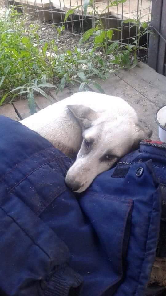 Сбитая собачка без надежды лежала в грязи… Но добрый мужчина не бросил Фасольку в беде – и теперь она живёт в домике с кошками