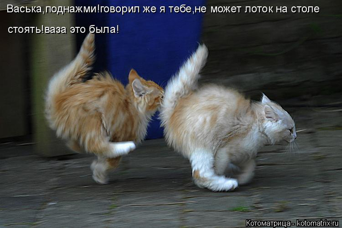 kotomatritsa_97 (700x466, 257Kb)