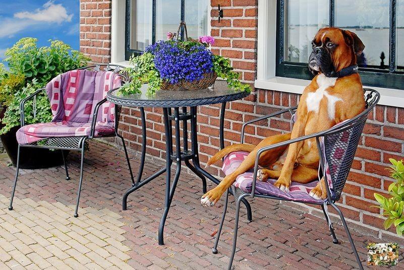 Собака для частного дома: какую породу выбрать?